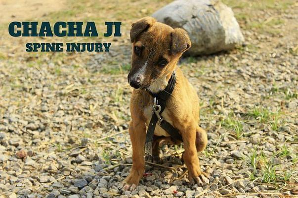 CHACHA JI !!