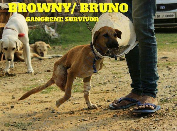 BRUNO IS HERE, GUYS!!