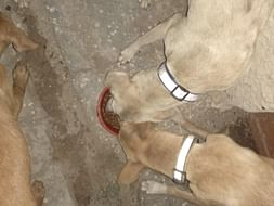 Help Us Feed the Voiceless Strays.