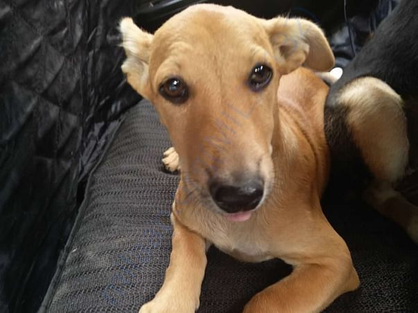 Our more than 100 dogs got adopted.One of them is Mia.Adopted in Noida