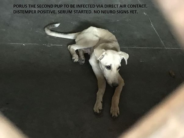Help Us Make India's First Canine Viral Diseases Treatment Center