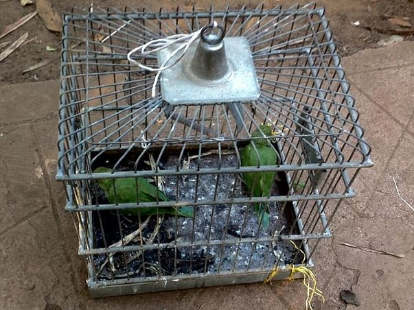 Help two caged Parakeets find freedom