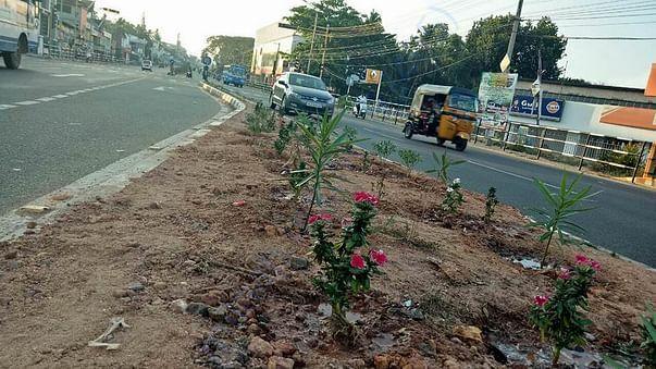 Median Planting