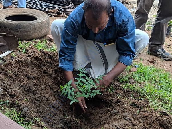 Planting tree in another Area