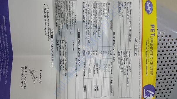 Blood Report 1