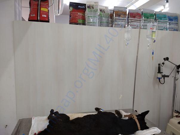 Blackie in hospital2