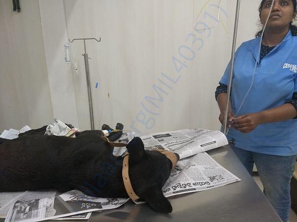 Blackie in hospital3
