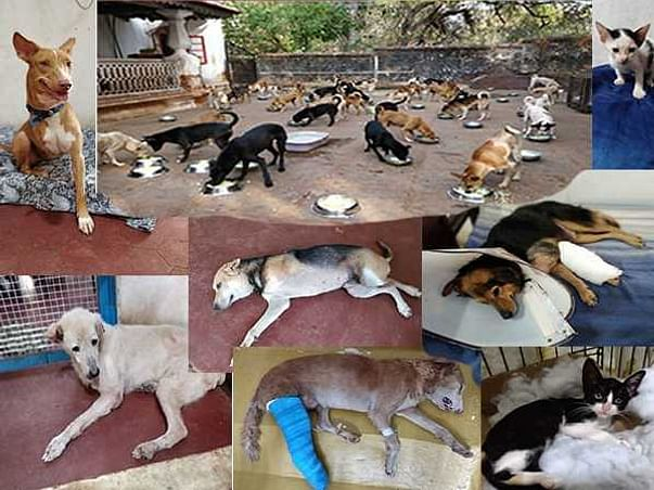 PLEASE help H.O.M.E run it's Sanctuary for abandoned & abused animals!