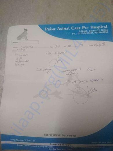 Prime Animal Care Prescription