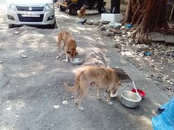 Help Us Continue Feeding The Strays Of Vikhroli (Our Extended Family)