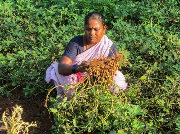 Help Farmers And Hawkers To Raise Their Livelihood