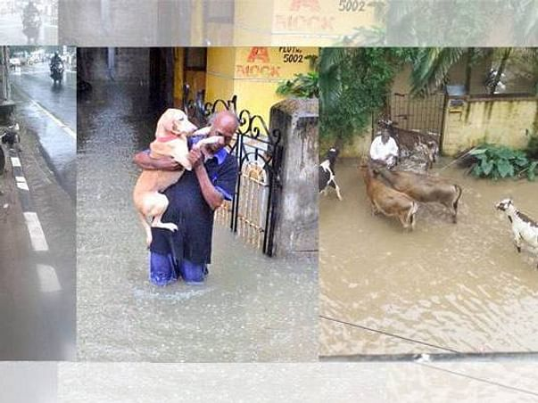 300+ Dead And Many Stranded- Kerala Will Drown without Urgent Help