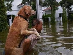 Help Save the Animals of Kerala