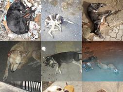 Help us save the strays of Kolkata
