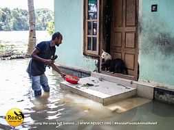 Animals of Kerala need your help! Save the Speechless & forgotten