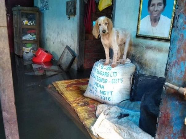 Help....India's 'biggest' pet rescue operation in Kerala floods