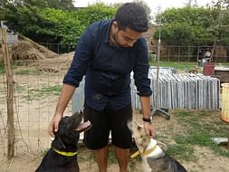 Help Us Sustain and Treat Stray Dogs!