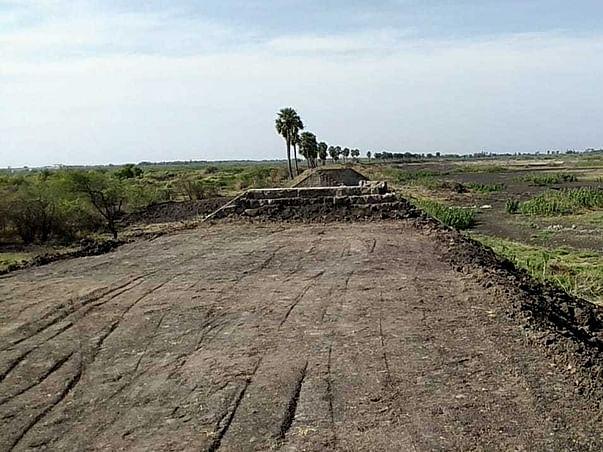 Tree Plantation in Pudukkottai & Sivakasi of Tamil Nadu