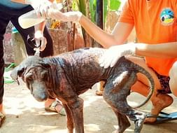 Help Marley have a dignified life