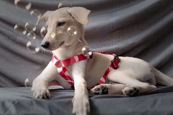 From fourth adoption photo shoot.