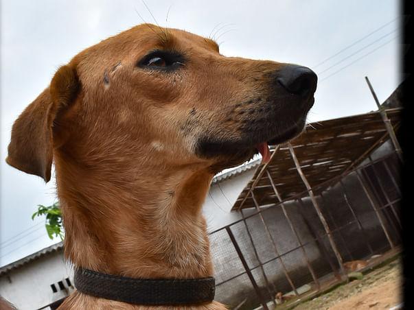 Fund Raiser for Construction of Kennels at VoV Shelter