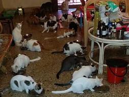 October Food Fund- Cat Sanctuary Goa