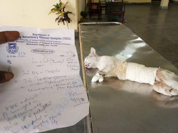 CATsteriliations
