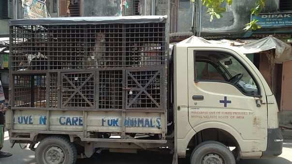 Dogs being picked up for sterilization