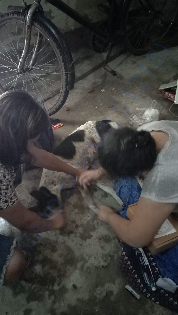 Treatment of a Senior dog of Bijoygarh who was hit by a bike