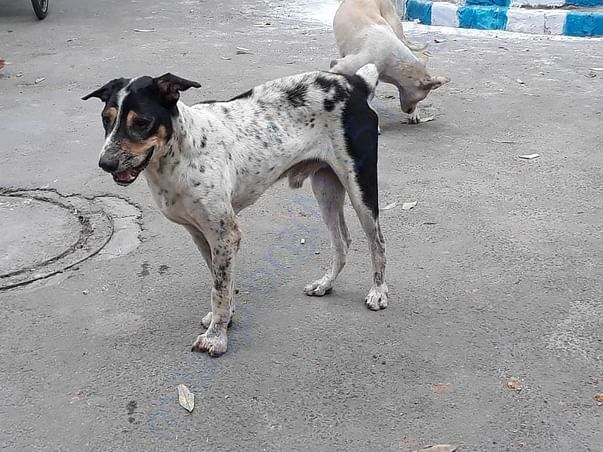 Deworming and Vaccination of stray dogs