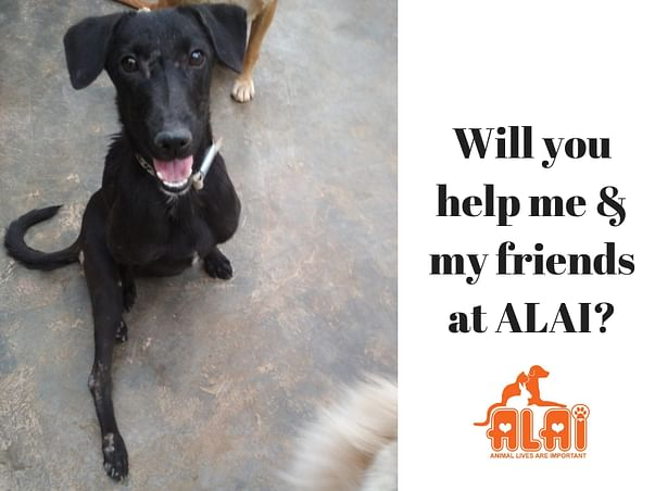 Help ALAI pay for the medicines purchased to treat rescues!