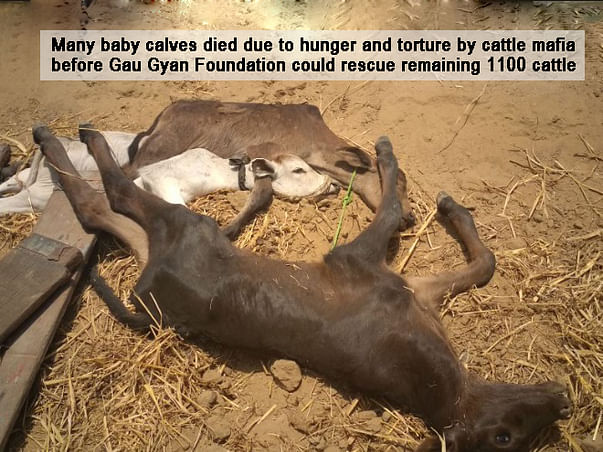Help in Feeding And Sheltering The Voiceless