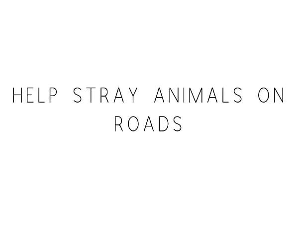 Help Stray Animals On Road