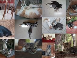 Help Us Neuter Street Cats in our Neighborhood