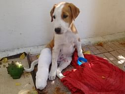 Help to complete the work of an Animal Shelter.