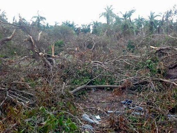 Help Rebuild Pushpavanam after Cyclone Gaja