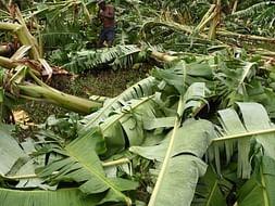 Gaja Cyclone- Help Us to Save Nagapatanam