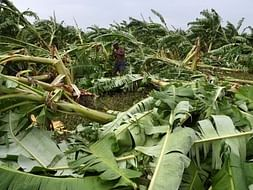 Gaja Storm Disaster Fund Relief