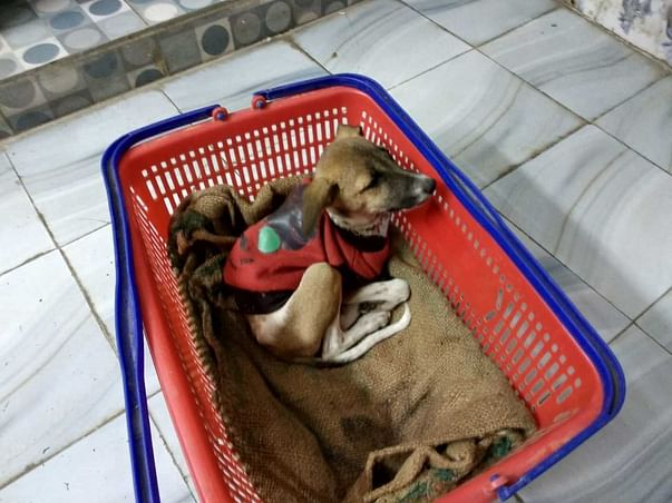 STRAY DOGS NEED YOUR HELP