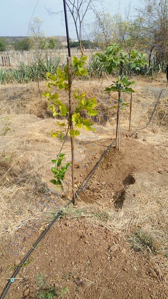 Drip irrigation phase-I