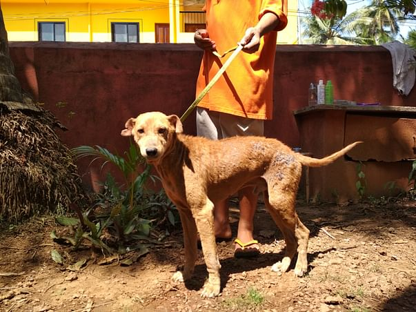 Help our new Rescue Clinic keep Marley & his friends safe