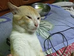 Help Me Raise Funds for My Cat Attacked by Maggots