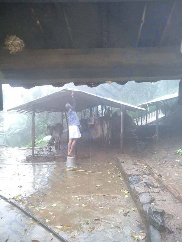 A cow farm which is affected in cyclone