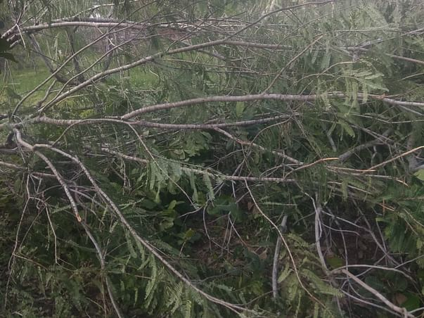 Help A Forst Recover From GAJA cyclone