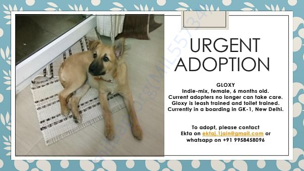 Gloxy adoption poster  (Pic when at previous adopter's house)