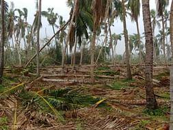 Save Delta  Cyclone Gaja Releif Campaign