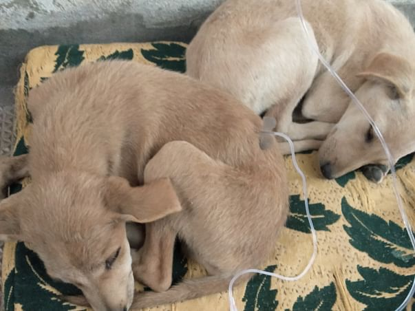 Help Mahreen Save Dogs and Give Them Shelter
