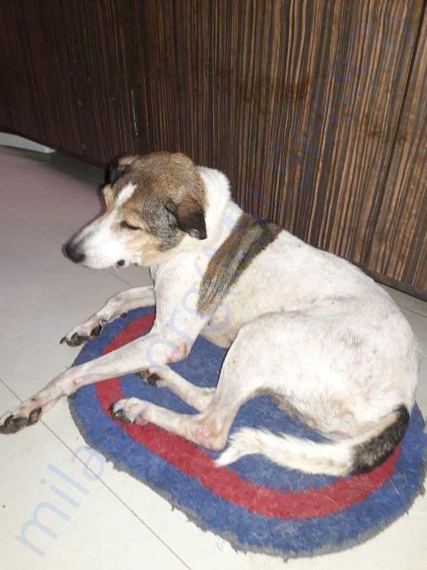 Gunda's recovered skin