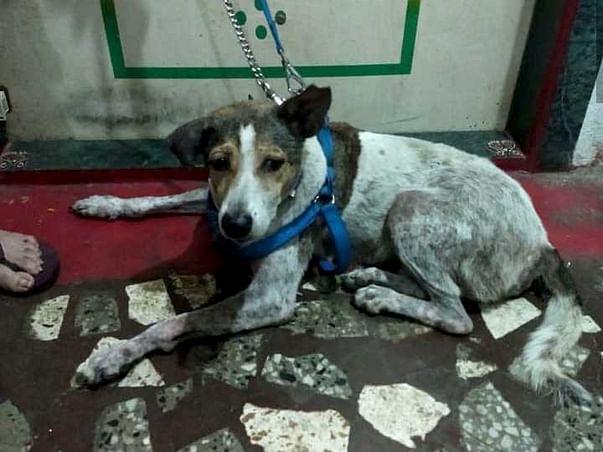 Help Us Pay Gunda's Bills and Take Him Home