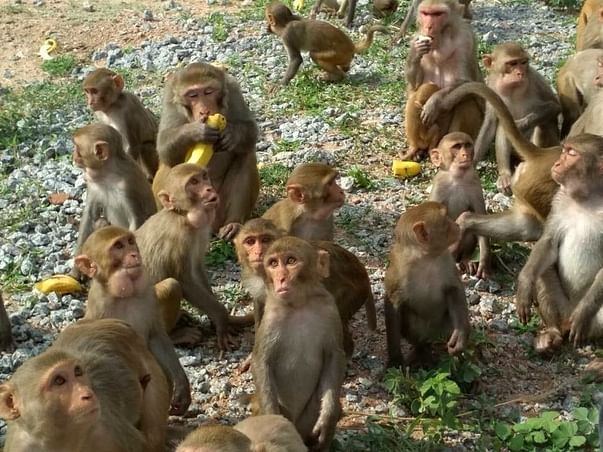 Save Monkeys from Becoming an Endangered Species